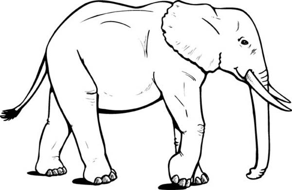 Big Elephant Wander Around Coloring Page