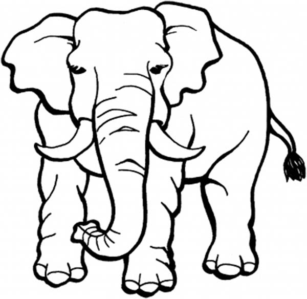 Big Male Elephant Coloring Page