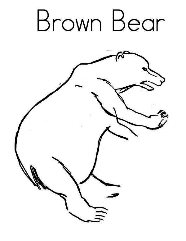 Brown Bear Attack Coloring Page