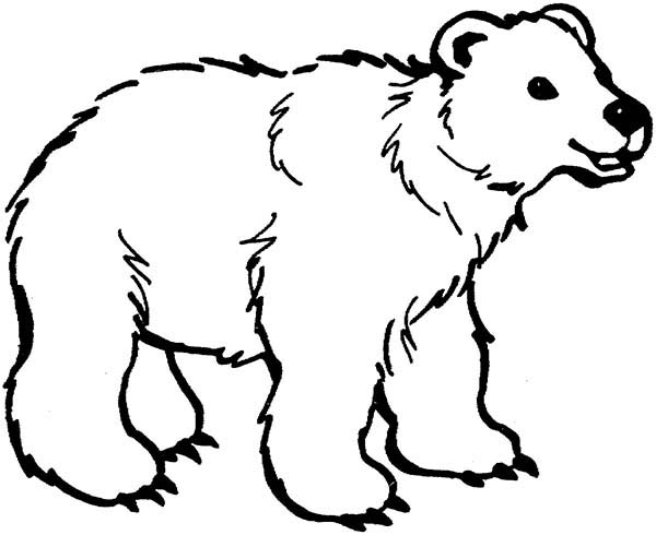 Cute Little Bear Coloring Page