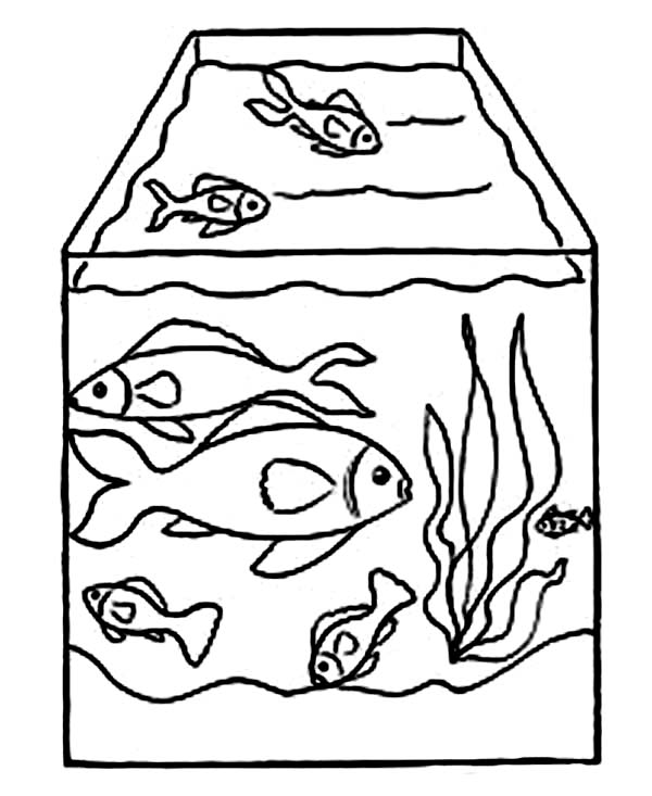 Tank free coloring pages for Fish tank coloring page