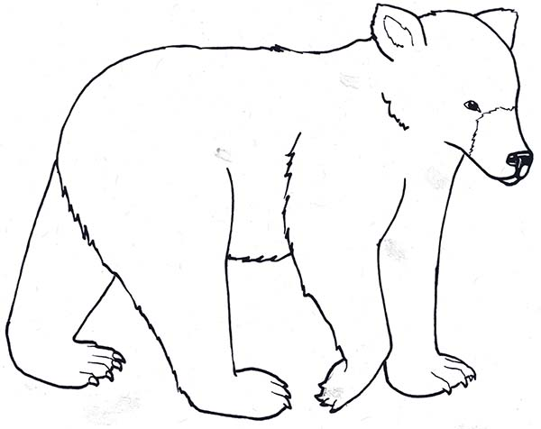 bear hunt coloring pages - photo#21