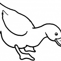 Duck Looking for Food Coloring Page