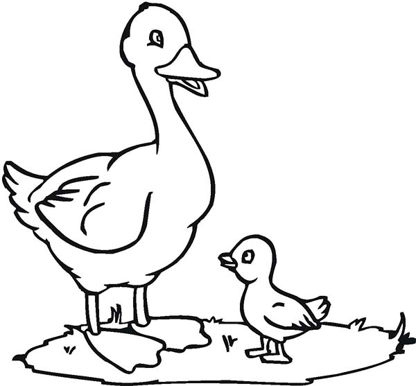 Duck Mother And Her Child Coloring Page