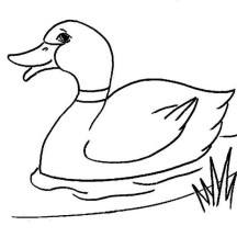 Duck Picture Coloring Page
