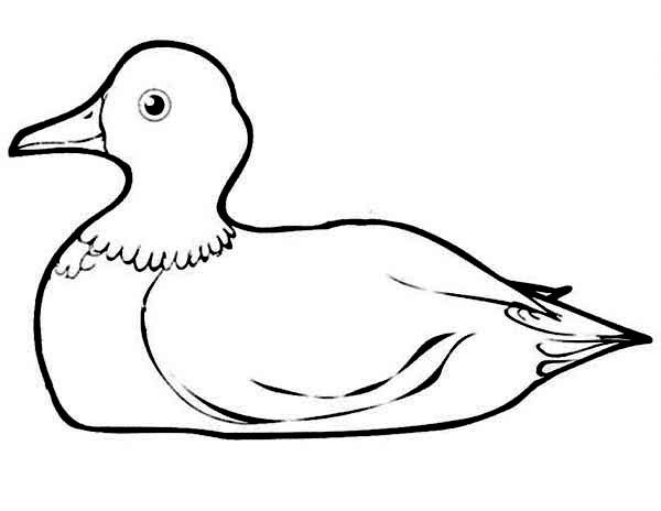 Duck is Sitting Down Coloring Page