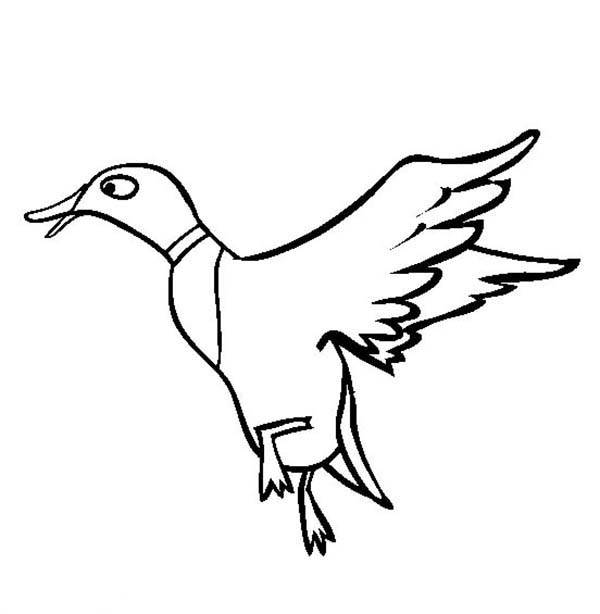 Flying Duck Coloring Page NetArt