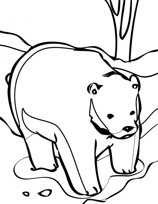 How to Draw Polar Bear Coloring Page