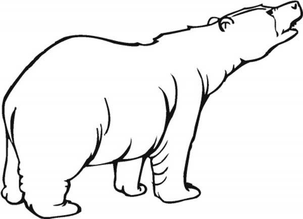 Hungry Polar Bear Coloring Page