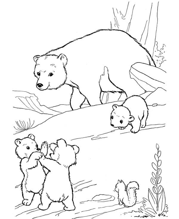 Little Bear Fight Among Themselves Coloring Page NetArt
