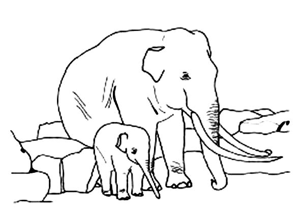 Parenting Elephant Coloring Page