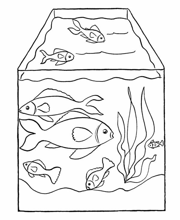 Pets and fish free colouring pages for Fish tank coloring pages