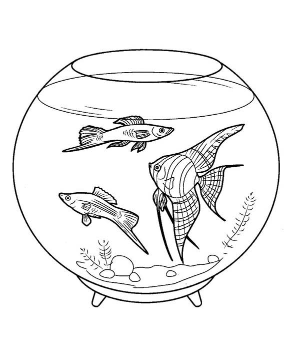 Fish tank coloring page for Fish tank coloring page