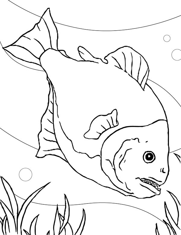 Special Fish Tank for Piranha Coloring Page NetArt