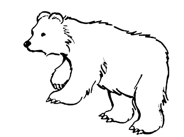 This Bear is Hungry Coloring Page