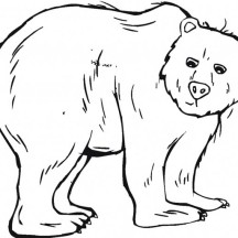 Trembling Black Bear Coloring Page