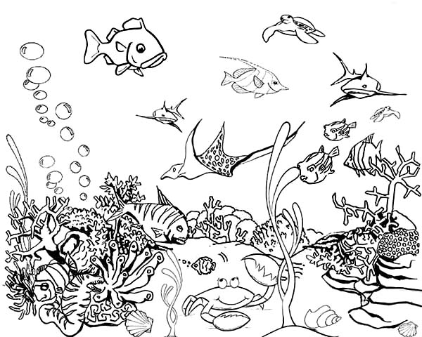 Tropical Fish Tank Coloring Page