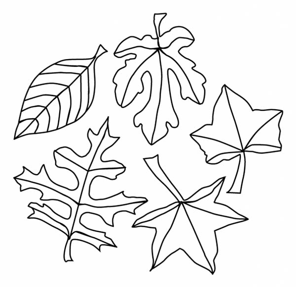 A Lot of Maple Autumn Leaf Coloring Page