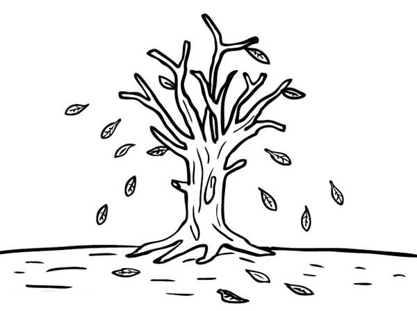 Leafless Tree in Autumn Leaf Coloring Page NetArt