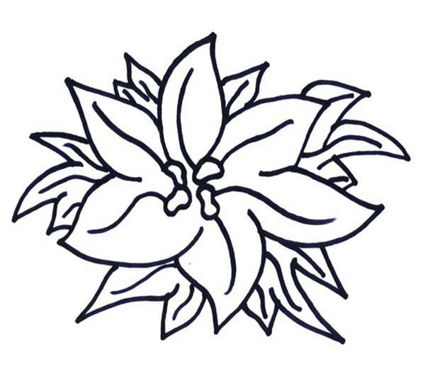 New Years Poinsettia for National Poinsettia Day Coloring Page