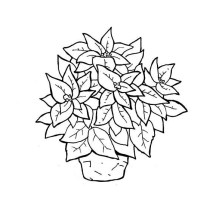 Poinsettia in Ceramic Pot for National Poinsettia Day Coloring Page