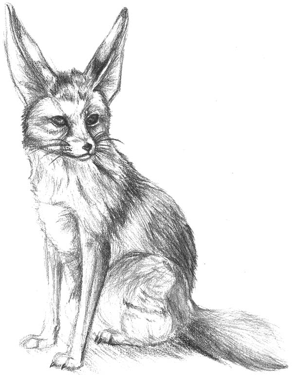 blue fox coloring pages