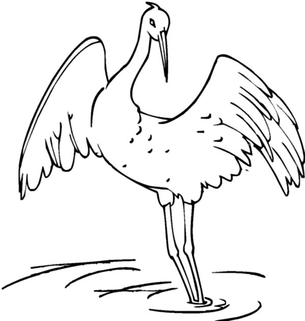 Amazing Animal Crane Bird Coloring Pages