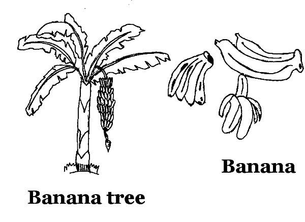 banana tree coloring pages