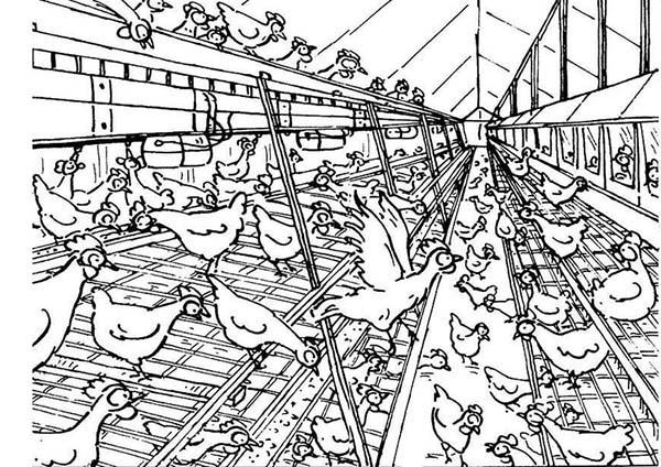 Big Chicken Coop Coloring Pages