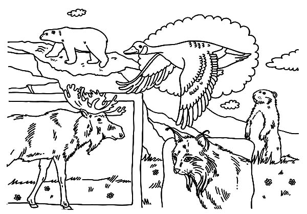 Canada Day National Animals Coloring Pages