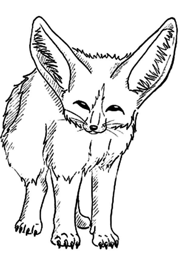 Cautious Desert Fox Coloring Pages