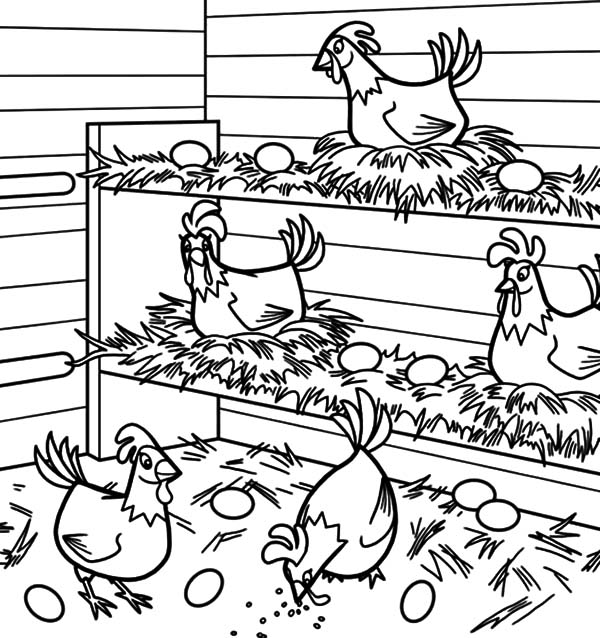 Chicken Lays Egg in Chicken Coop Coloring Pages