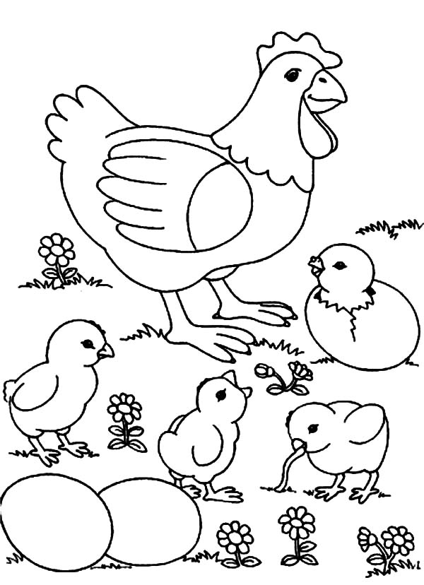 Chicken Mother and Chicks and Eggs Coloring Pages