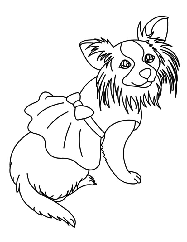 Chihuahua Dog Dress Coloring Pages