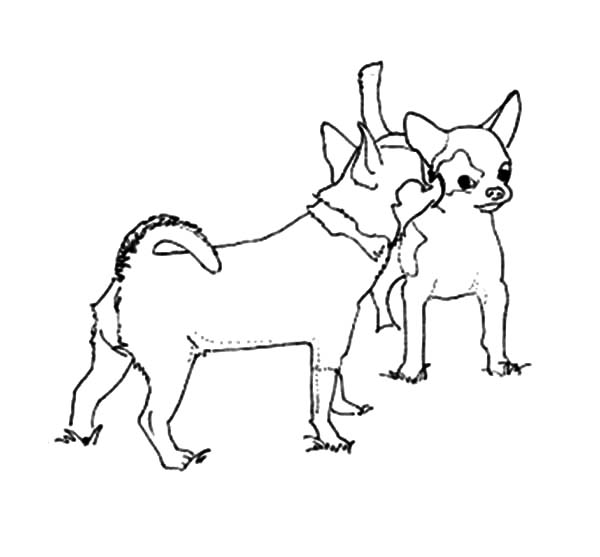 Chihuahua Dog Mating Coloring Pages