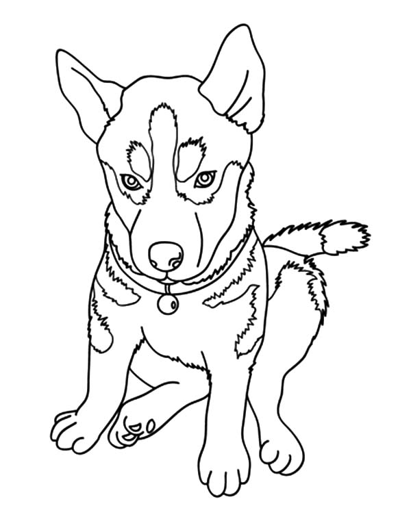 Chihuahua Dog Picture Coloring Pages