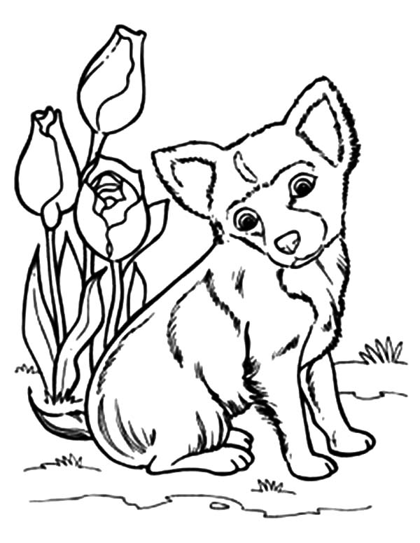 Chihuahua Dog Sitting Beside Tulips Coloring Pages