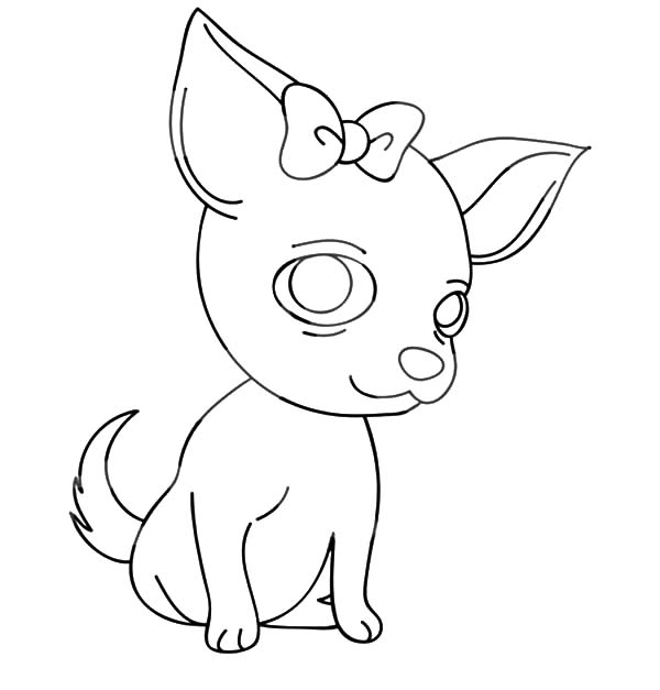 Chihuahua Dog with a Bow Coloring Pages NetArt