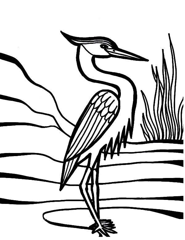 Crane Bird Beautiful Feather Coloring Pages