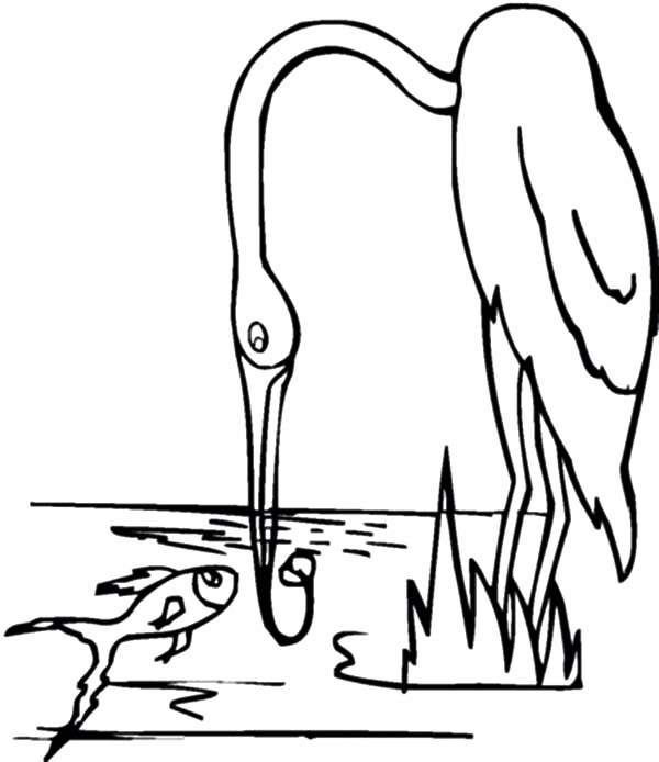 Crane Bird Fishing Coloring Pages