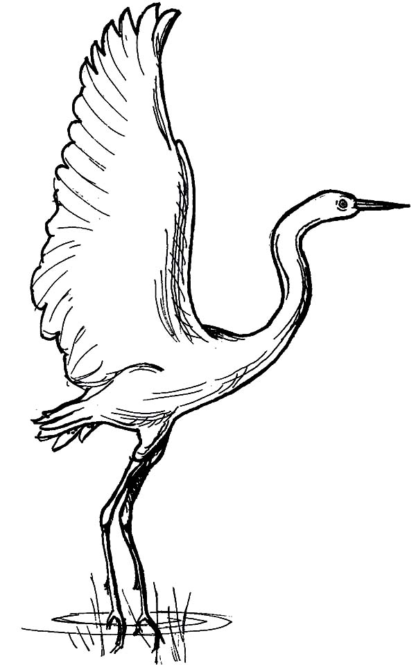 Crane Bird Landed on Swamp Coloring Pages