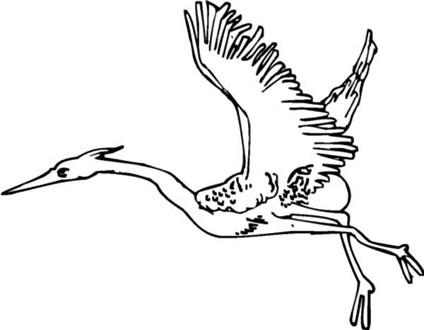 migrating birds coloring pages - photo#5