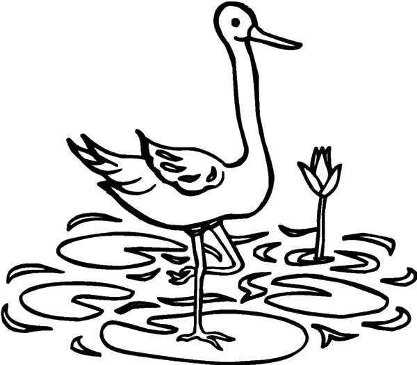 Crane Bird Standing on Lotus Leaf Coloring Pages