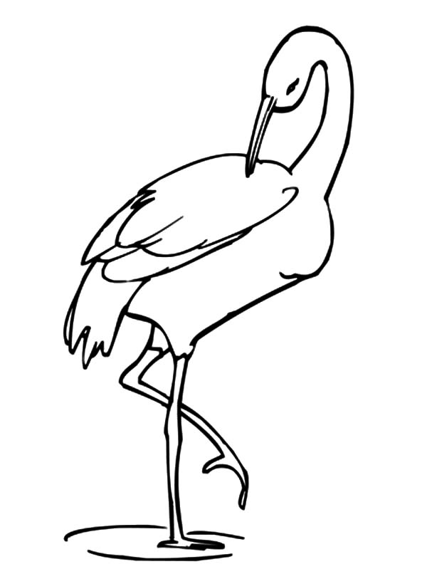 Crane Bird Stands on One Leg Coloring Pages