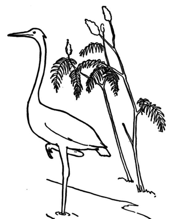 Crane Bird and Water Plant Coloring Pages