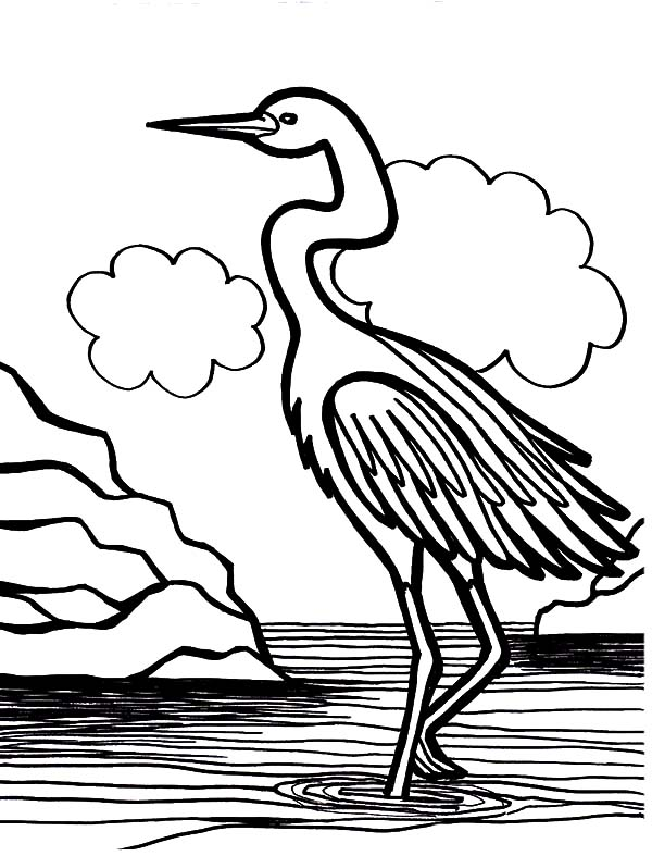 Crane Bird Is Swamp Coloring Pages