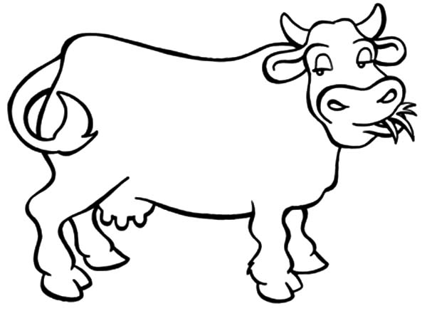 Dairy Cow Chewing Grass Coloring Pages