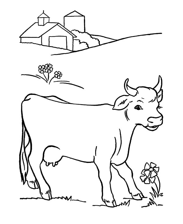 Dairy Cow Found Beautiful Flower Coloring Pages