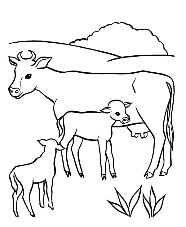Dairy Cow Milking Her Babies Coloring Pages
