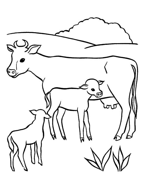 Dairy Cow Netart
